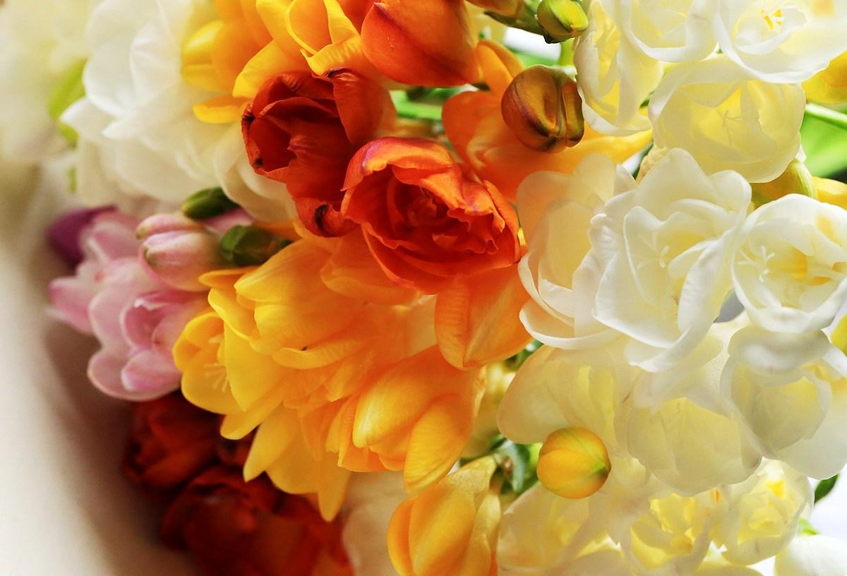 Kwiaty Frezje